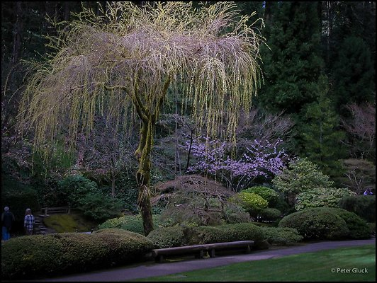 japanese garden 097
