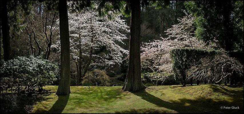 japanese garden 101