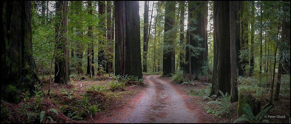 humboldt redwoods 017