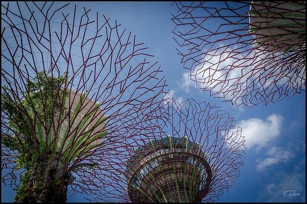 Singapore Gluck 033