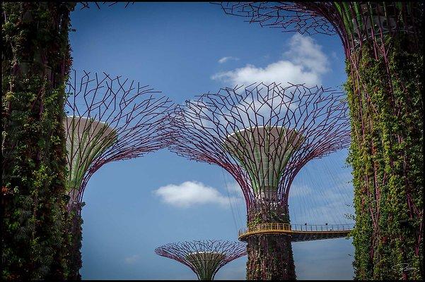 Singapore Gluck 034