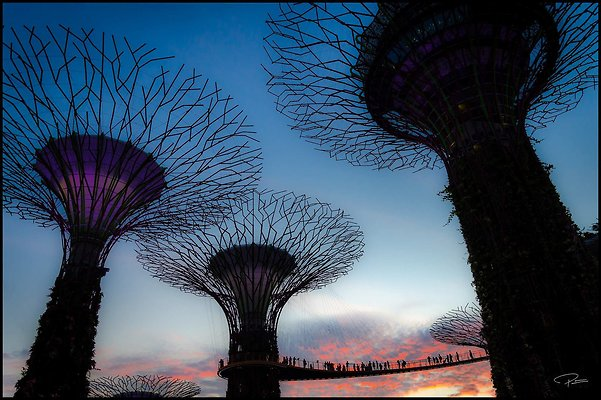 Singapore Gluck 041