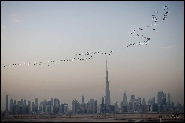 Dubai Gluck 059