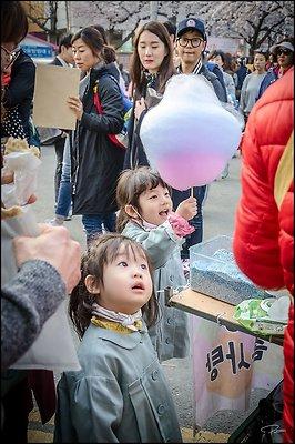 Korea Jinhae 2017Apr02 PG 087