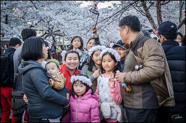 Korea Jinhae 2017Apr02 PG 126