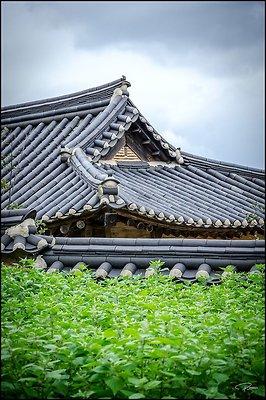 Korea Gangwon WanggokVillage 2017Sept10 PG 054