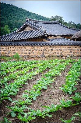 Korea Gangwon WanggokVillage 2017Sept10 PG 026