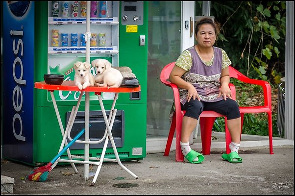 Korea Gangwon Puppies 2017Sept09 PG 024