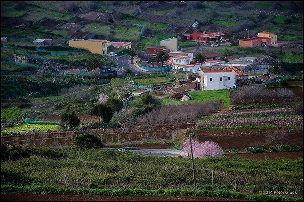 Tenerife 059
