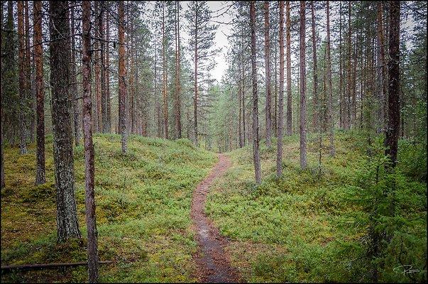 Finland  Kuusamo OulankaNatlPark 2018 Aug14 PG 008