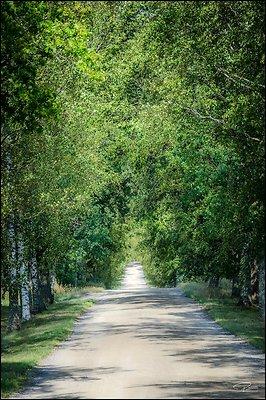 Finland Turku LouhisaariEstate 2018 Aug17 PG 103