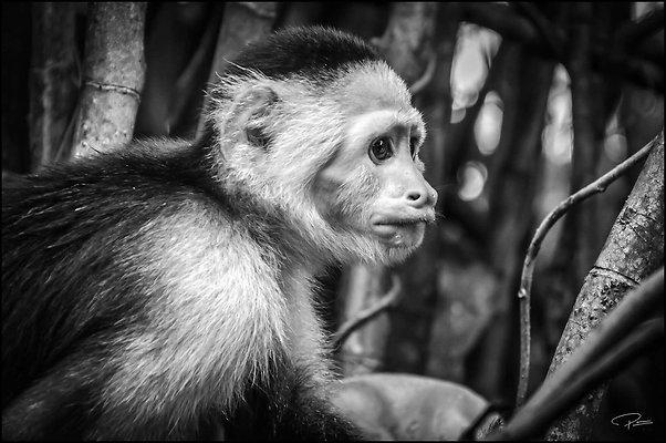 Panama Panama MonkeyIslandWounaanVillage 2019 Nov29 PG 164 PG