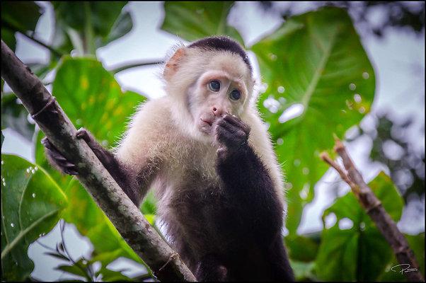 Panama Panama MonkeyIslandWounaanVillage 2019 Nov29 PG 163 PG
