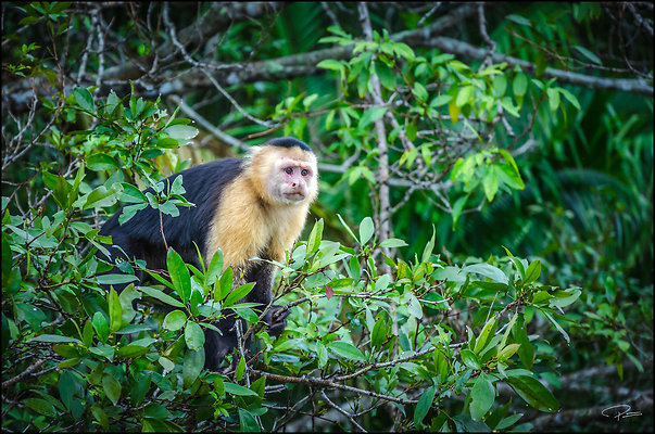Panama Panama MonkeyIslandWounaanVillage 2019 Nov29 PG 103 PG