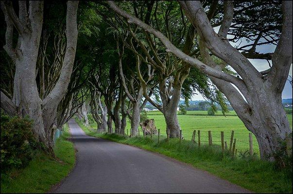 Ireland TheHedges 2014 06 13 PG 003