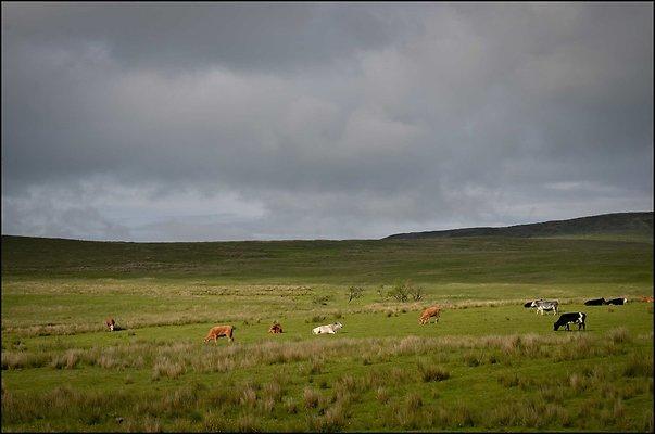Ireland miscCountryside 2014 06 13 PG 093
