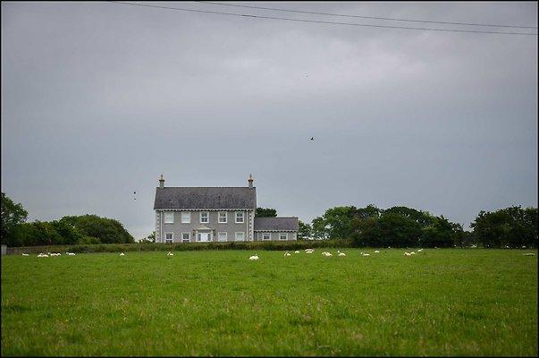Ireland CoAntrimArea 2014 06 13 PG 166