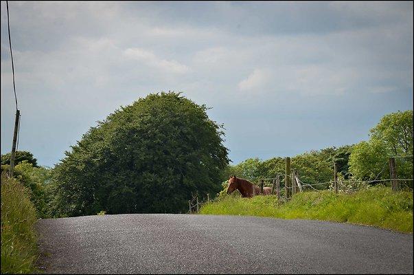 Ireland miscCountryside 2014 06 13 PG 092