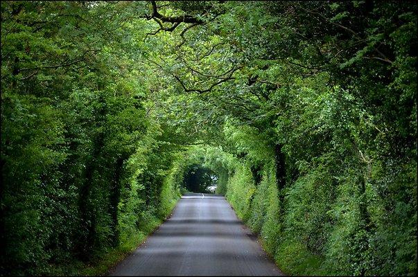 Ireland TheHedges 2014 06 13 PG 046
