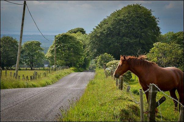 Ireland miscCountryside 2014 06 13 PG 086a