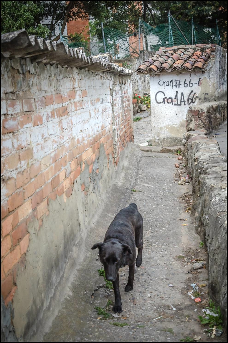 Bogota Chapinero 120924 PG 030